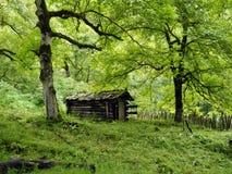 De oude cabine in het hout Stock Foto