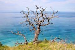De oude dode eiken boom en het overzees Stock Afbeelding