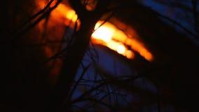 De oude droge bomen branden in het bos bij nacht