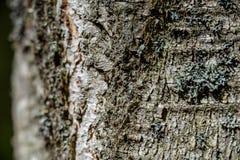 de oude droge boomboomstam stampt textuur met schors stock afbeeldingen