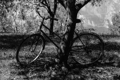 De oude fiets tegen een boom Royalty-vrije Stock Foto's
