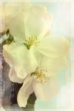 De oude foto van bloemen Stock Foto's