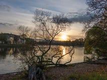 De oude gebogen wilg bij zonsondergang Stock Foto