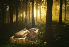 De Oude graven in een bos bij nacht royalty-vrije stock foto's
