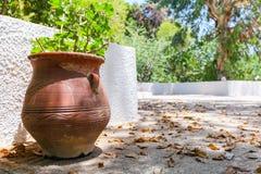 De oude Griekse kleikruik op stenen met installatie en gevallen bladeren op de straat Royalty-vrije Stock Foto's