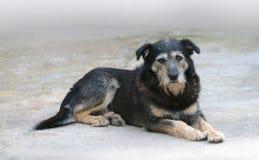 De oude hond stock foto