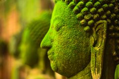 De oude hoofdgipspleister van Boedha werd in openlucht verlaten En groen mos stock afbeelding
