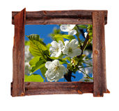 De oude houten frames Lente Royalty-vrije Stock Foto's