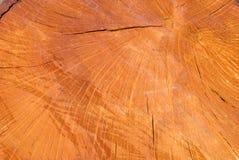 De oude houten holm eiken oppervlakte van de boombesnoeiing Gedetailleerde warme donkere bruine en oranje tonen van een felled bo stock afbeelding