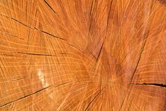 De oude houten holm eiken oppervlakte van de boombesnoeiing Gedetailleerde warme donkere bruine en oranje tonen van een felled bo royalty-vrije stock foto's