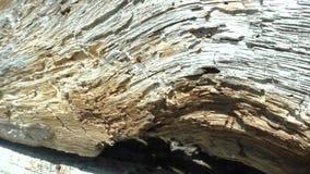 De oude houten lijnen van de raadsbarst buigt wervelingen stock video