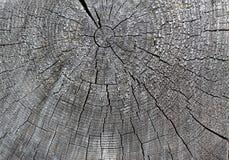 De oude houten textuur met natuurlijke patronen Dwarsdoorsnede van de oude boom Stock Foto's