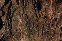 De oude houten textuur van de boomschors met groen mos royalty-vrije stock afbeelding