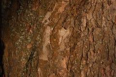 De oude houten textuur van de boomschors met groen mos stock foto