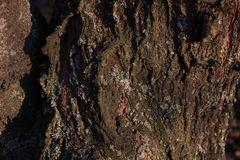 De oude houten textuur van de boomschors met groen mos royalty-vrije stock foto