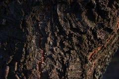 De oude houten textuur van de boomschors met groen mos royalty-vrije stock fotografie