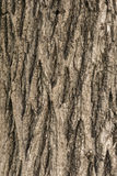 De oude Houten Textuur van de Boom royalty-vrije stock afbeeldingen