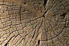 De oude houten textuur van de close-up Stock Foto