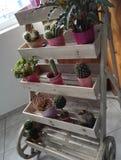 De oude houten tribune van de bloem roze pot met bloeminstallaties Stock Afbeelding