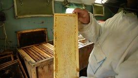 De oude imker houdt een kader met honingraat en honing in de ruimte waar de kaders met was en honing worden opgeslagen stock video