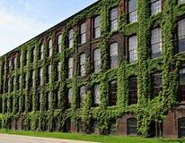 De oude industriële die bouw in klimop wordt behandeld Royalty-vrije Stock Foto's