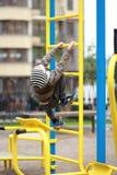 De oude jongen die van vijf jaar in de straat, in de openluchtgymnastiek in de werf op de speelplaats uitwerken Royalty-vrije Stock Afbeeldingen