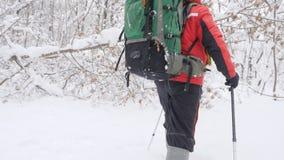 De oude Kaukasische mens maakt zijn manier met Wandelingsstokken door struikgewas in een dicht sneeuw bos Dik dicht struikgewas v stock video