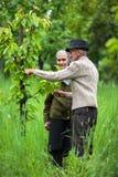 De oude landbouwers koppelen in de boomgaard Stock Foto's