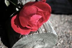 De oude liefde is geen gegaane liefde Stock Fotografie