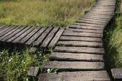 De oude manier van de de maniergang van de cementweg op gazon met gras, y-vorm Stock Afbeeldingen