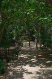 De Oude Mayan wildernisweg door de oceaan in Tulum Mexico Stock Afbeelding