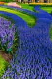 De oude molens van het tulpengebied adnd in netherland Royalty-vrije Stock Fotografie