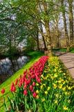 De oude molens van het tulpengebied adnd in netherland Royalty-vrije Stock Foto
