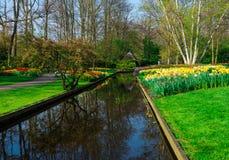 De oude molens van het tulpengebied adnd in netherland Stock Fotografie