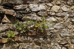 De oude Muur van de Rots stock foto's