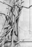 De oude naakte wijnen van de wisteriainstallatie in de winter - antieke steenmuur Stock Foto's