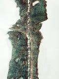 De oude roest van het metaalijzer Royalty-vrije Stock Afbeelding