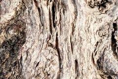 De oude rotte boomstomp of de boomstam ontschorst omhoog rot na achtergrond van de leeftijden de dichte selectieve nadruk stock afbeelding