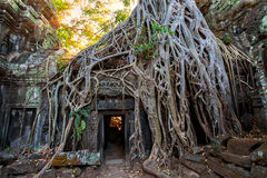 De oude ruïnes en de boomwortels, van een historische Khmer tempel binnen Royalty-vrije Stock Foto