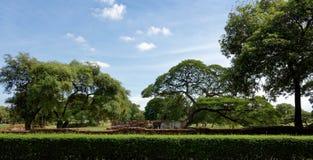 De oude ruïnes met grote bomen Stock Afbeeldingen