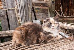 De oude rustieke kat aan flarden ligt op oude houten raad Royalty-vrije Stock Afbeelding