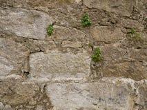 De oude, ruwe uitstekende textuur die van de steenmuur met installaties in barsten groeien royalty-vrije stock foto