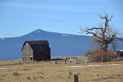 De oude schuur van het Klammathgebied Stock Foto