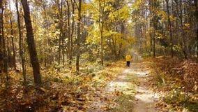 De oude sportieve vrouw stoot in de herfstbos aan stock videobeelden