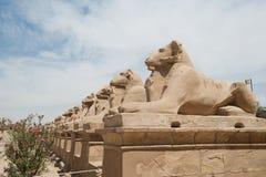 De oude standbeelden van Egypte van sfinx in de tempel van Luxor karnak Stock Foto's