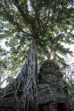 De oude tempel van Ta Prohm, Angkor, Kambodja royalty-vrije stock foto's