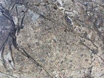 De oude textuur van het grunge concrete cement Royalty-vrije Stock Foto's