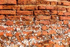 De oude uitstekende bakstenen muur met heel wat eendenmosselen maakt permanent op oppervlakten vast Royalty-vrije Stock Fotografie