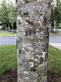 De oude uitstekende boom kweekt mos en korstmossen met groene gele witte en zwarte kleuren stock afbeeldingen