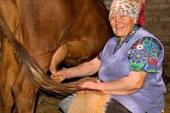 De oude vrouw melkt een koe Stock Afbeeldingen